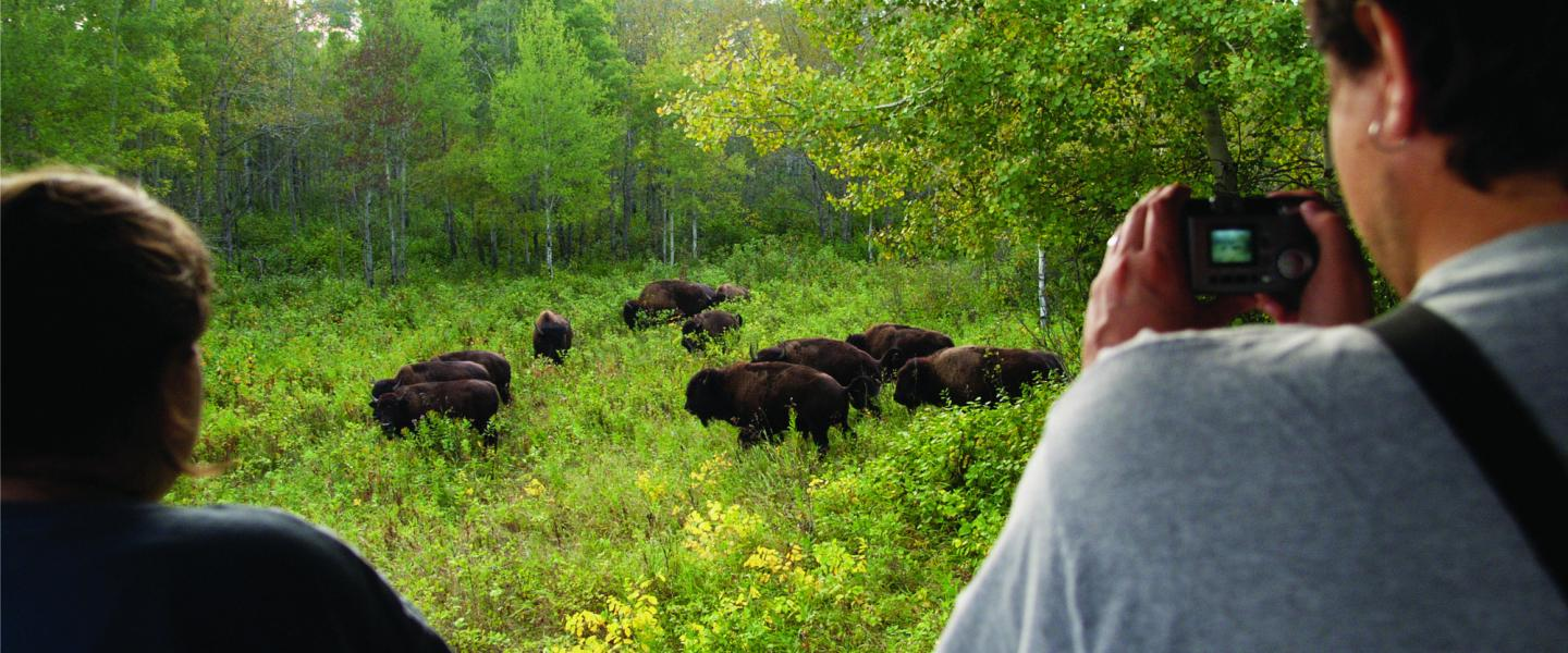 8 Reasons To Add Riding Mountain National Park To Your